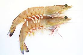 TINY PRAWNS 250GM